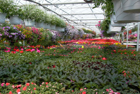 Inside our expansive greenhouse.